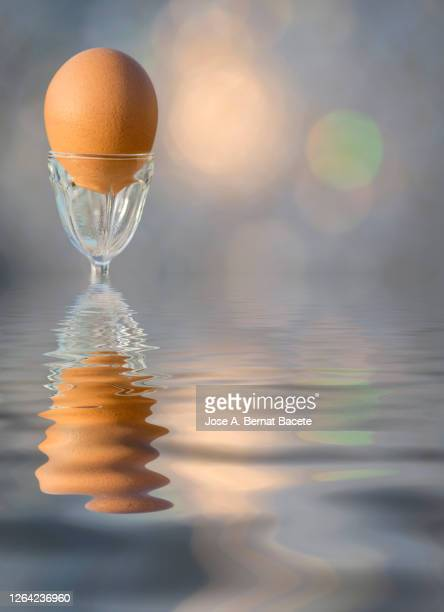 close-up of a brown boiled egg reflected on the water. - vorbeigehen stock pictures, royalty-free photos & images