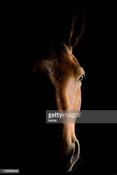 Close-up of a brown horse head