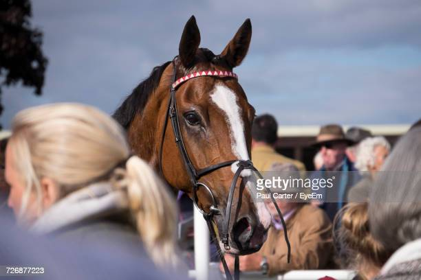 close-up of a brown horse - racehorse stock pictures, royalty-free photos & images