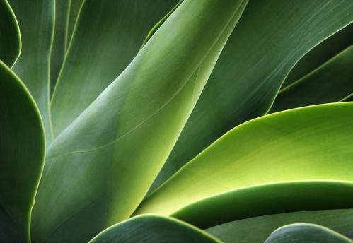 close-up of a cactus 178978574