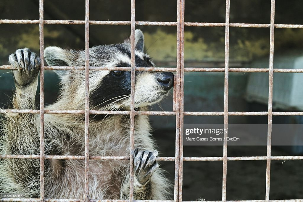 Close-Up Of A Caged Animal : Stock Photo
