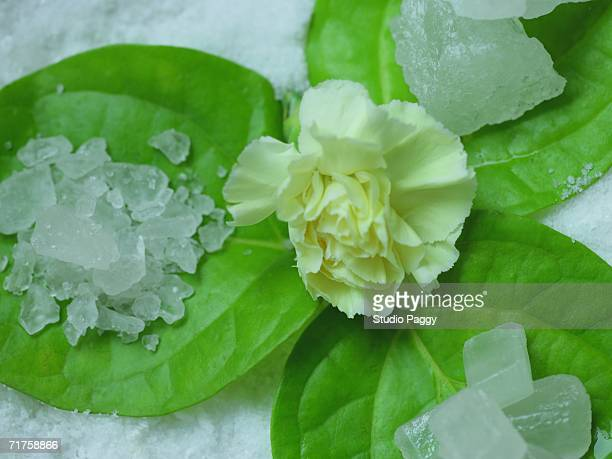 Close-up of a carnation flower and rock salt on leaves
