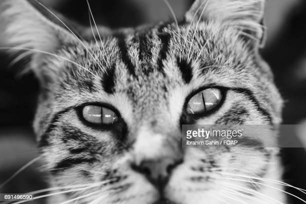 Close-up of a cat head