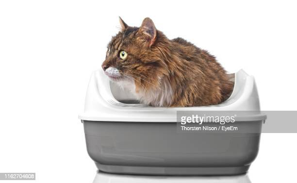 close-up of a cat looking away against white background - litter box stock photos and pictures