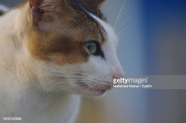 close-up of a cat looking away - muhamad nasrun stock pictures, royalty-free photos & images