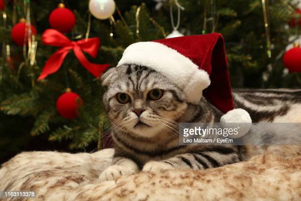 close-up of a cat looking away - cat with red hat stock pictures, royalty-free photos & images
