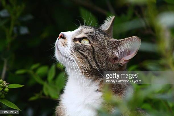 close-up of a cat looking up - kitty patterson stock pictures, royalty-free photos & images