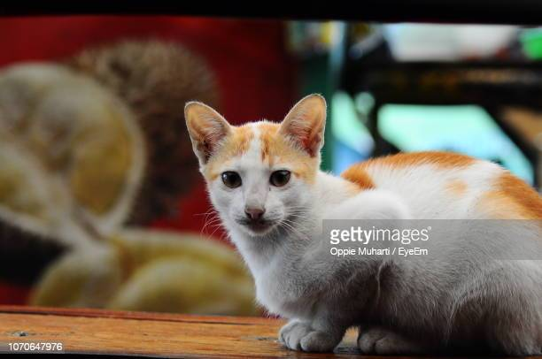 close-up of a cat - oppie muharti stock pictures, royalty-free photos & images