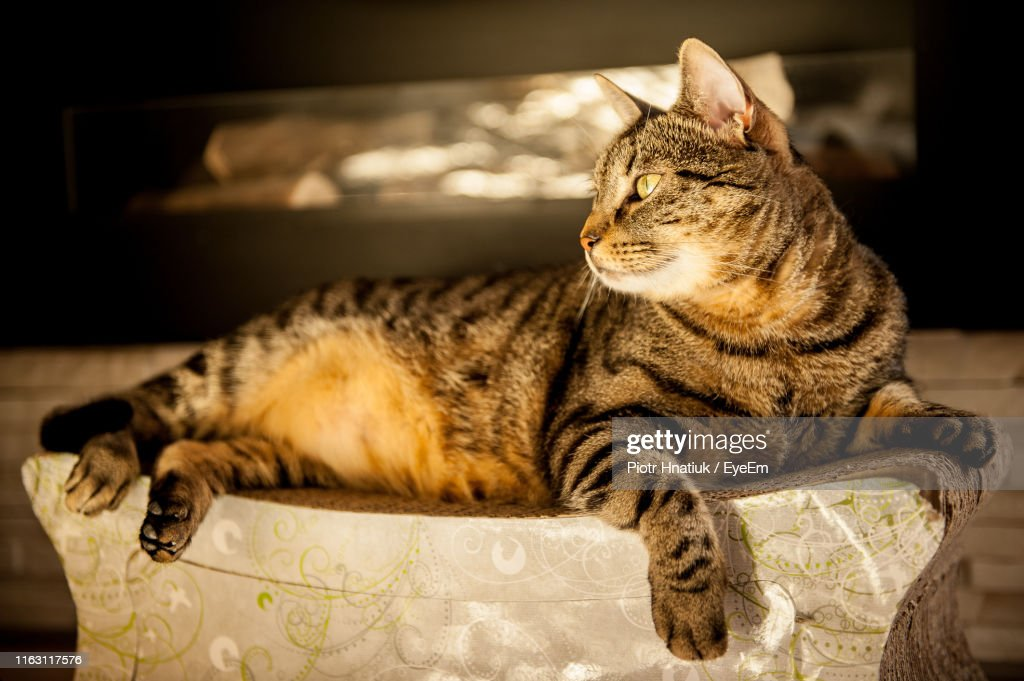 Close-Up Of A Cat Resting : Stock Photo