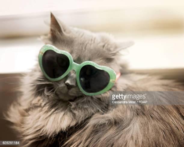 Close-up of a cat wearing sunglasses