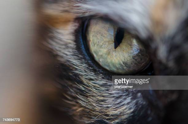 close-up of a cats eye - animal eye stock pictures, royalty-free photos & images