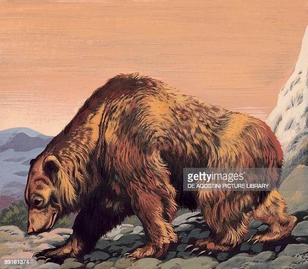 Closeup of a cave bear