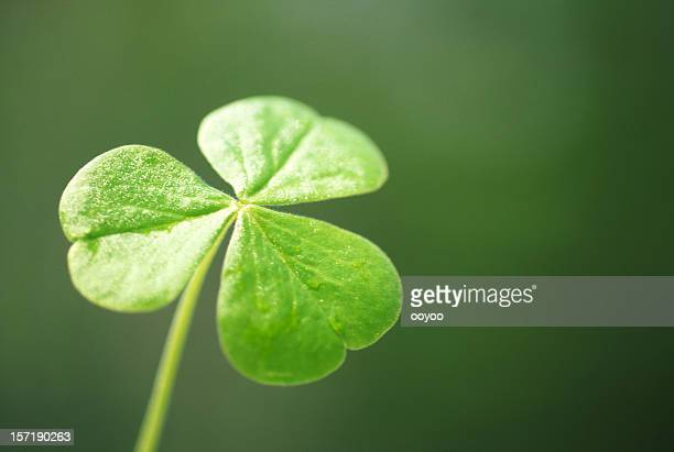 close-up of a clover - st patrick's day stock pictures, royalty-free photos & images