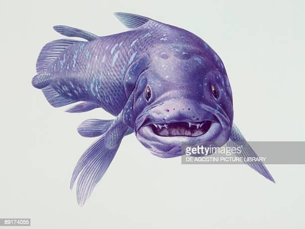 Closeup of a coelacanth