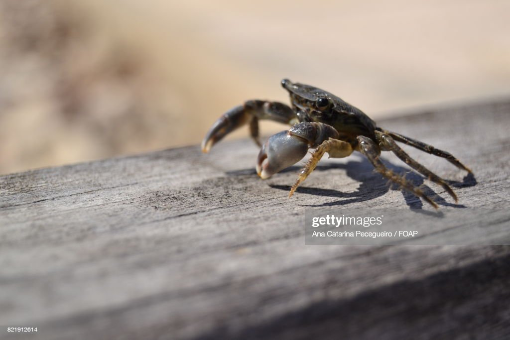 Close-up of a crab : Stock Photo