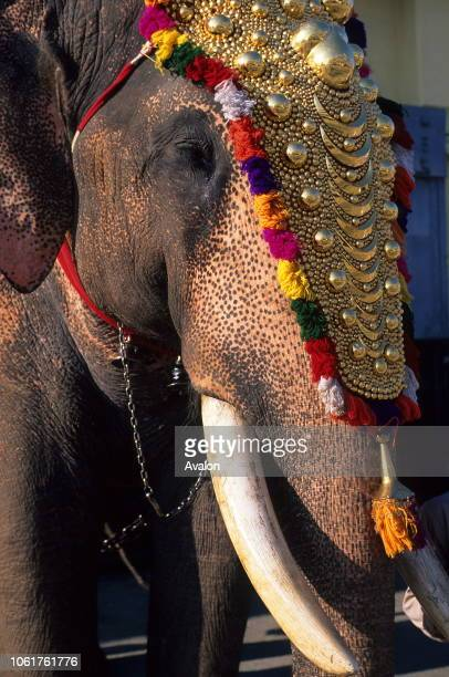 Kerala Elephants Stock Photos And Pictures Getty Images