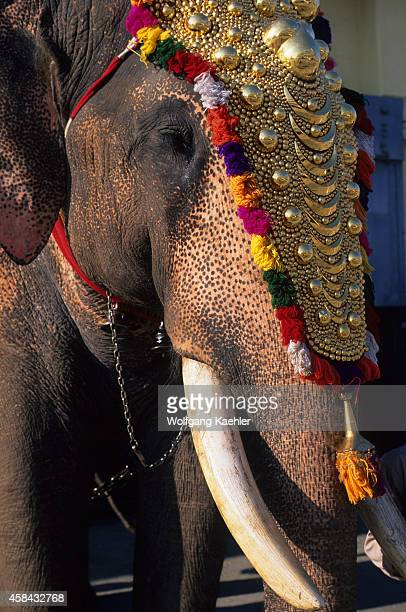 Closeup of a decorated elephant in Cochin in India