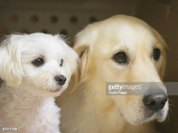 Close-up of a dog and a puppy