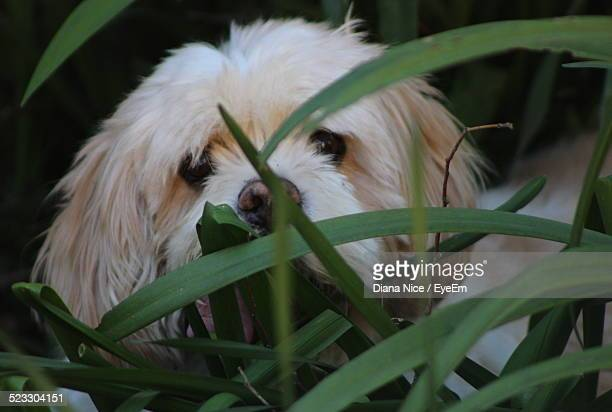 Close-Up Of A Dog Hiding In Grass