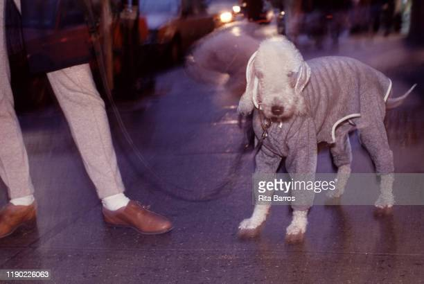 Closeup of a dog in a grey outfit New York New York 1994 The photo was taken as part of a story on canine fashions