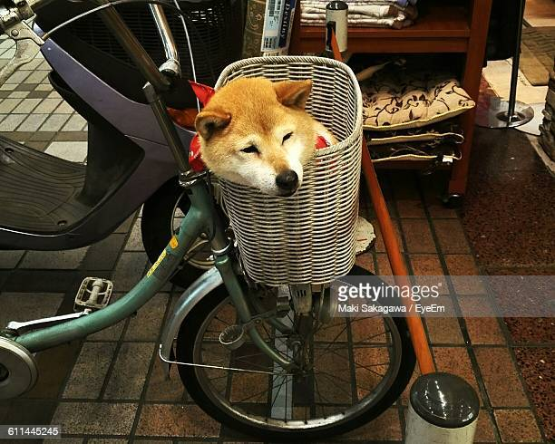 Close-Up Of A Dog In Bicycle Basket