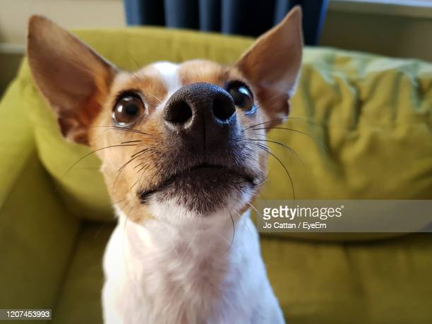 close-up of a dog looking away - animal whisker stock pictures, royalty-free photos & images