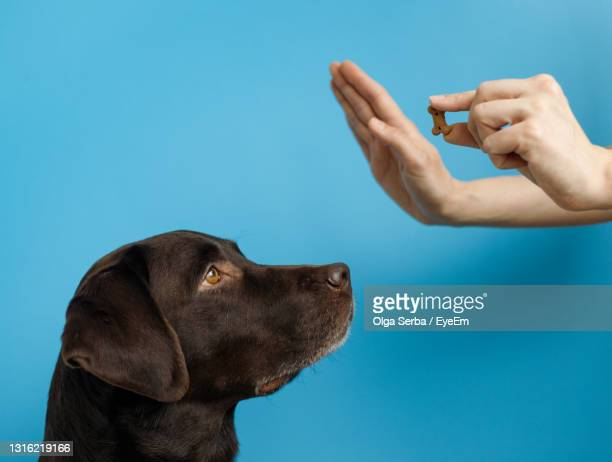 close-up of a dog over blue background - penalty ストックフォトと画像