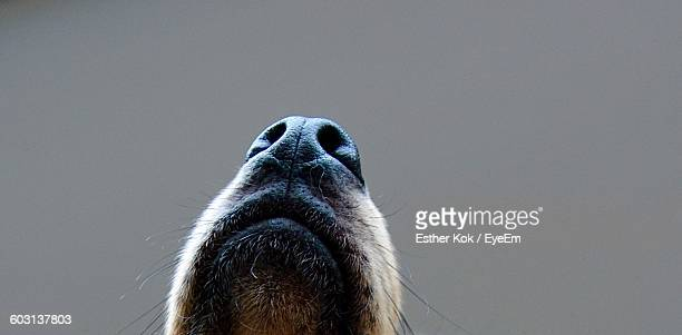 Close-Up Of A Dogs Nose