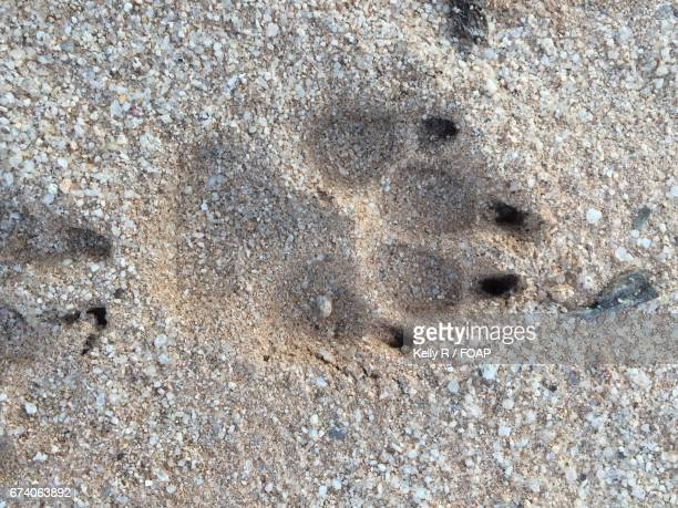 Close-up of a dog's paw print on sand