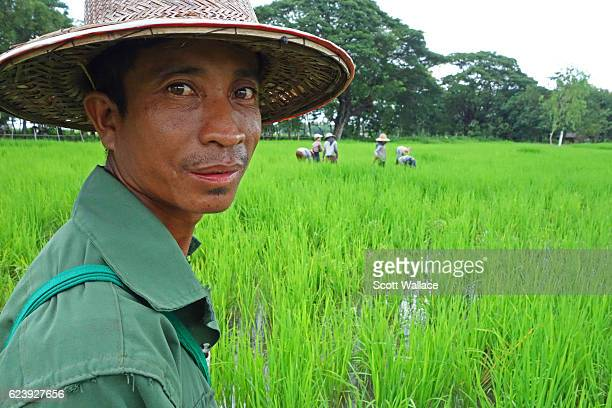Close-up of a farmer in a rice paddy, central Myanmar, 2013.