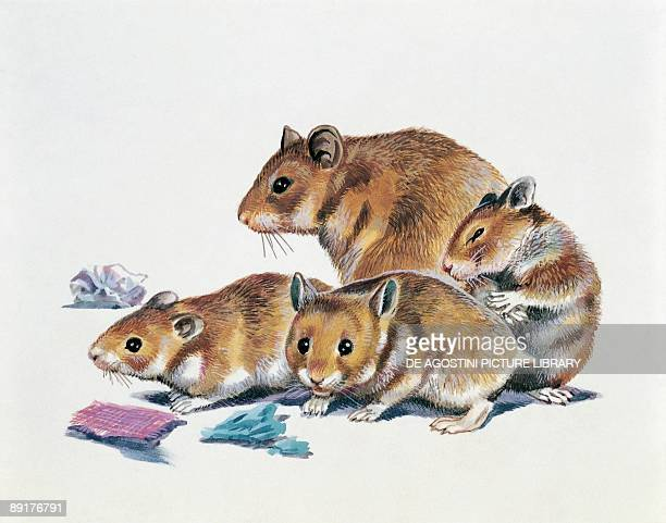 Closeup of a female hamster with its young