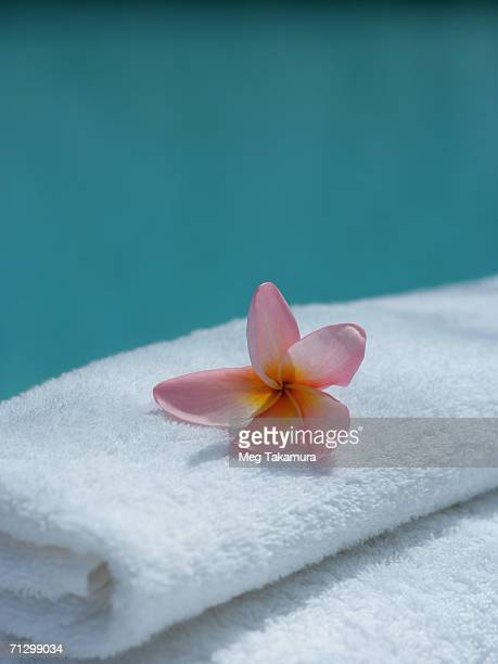 Close-up of a flower (Plumeria) on a towel