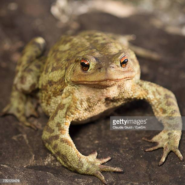 close-up of a frog - giusti claudia stockfoto's en -beelden