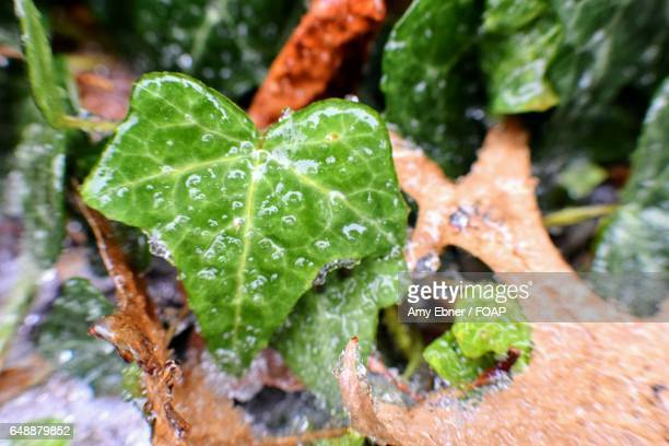 close-up of a frozen leaf - amy freeze stock pictures, royalty-free photos & images