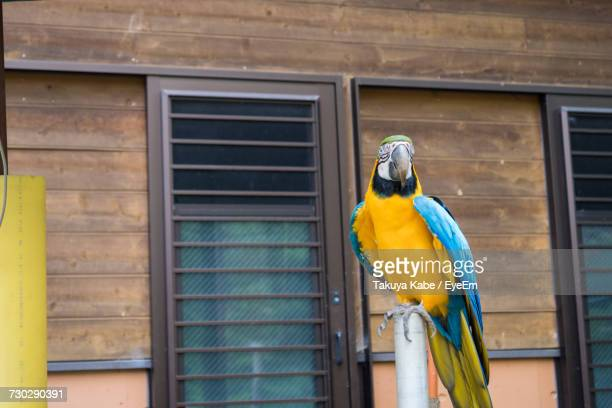 Close-Up Of A Gold And Blue Macaw