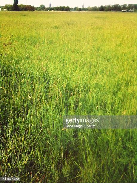 Close-up of a green field