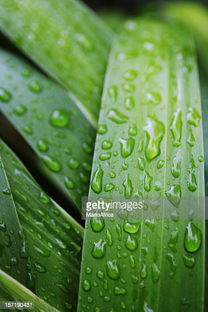Close-up of a green leaf with water droplets