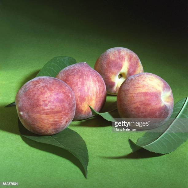Close-up of a group of fout Dixie red peaches and several leaves, Talagante, Santiago, Chile, July 29, 1987.