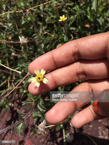 Close-Up Of A Hand Holding Flower