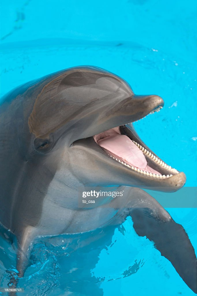 A close-up of a happy dolphin swimming : Stock Photo