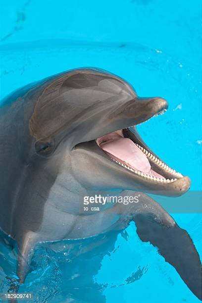 A close-up of a happy dolphin swimming