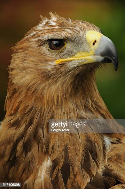 Close-up of a hawk