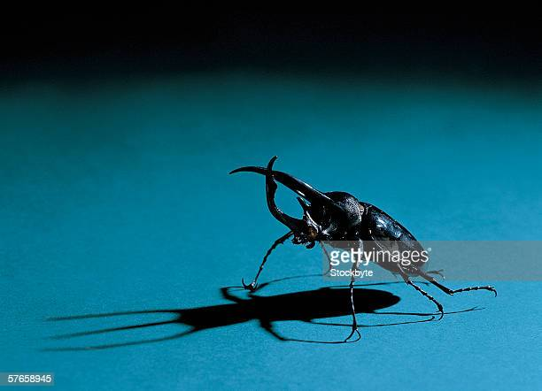 close-up of a horned beetle - horned beetle stock pictures, royalty-free photos & images
