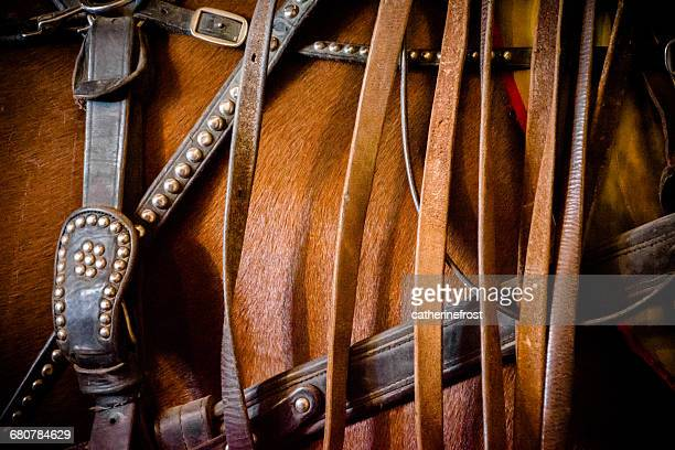 Close-up of a horse and horse tack