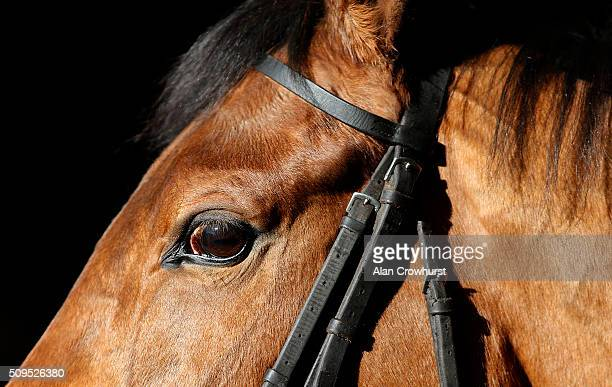 A closeup of a horse as runners wait to be saddled at Huntingdon racecourse on February 11 2016 in Huntingdon England