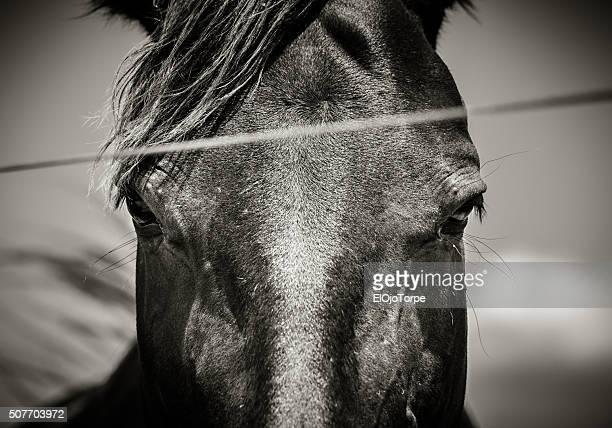 Close-up of a horse head