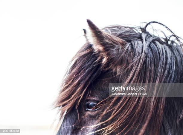 close-up of a horse head - alexandra cooper stock photos and pictures