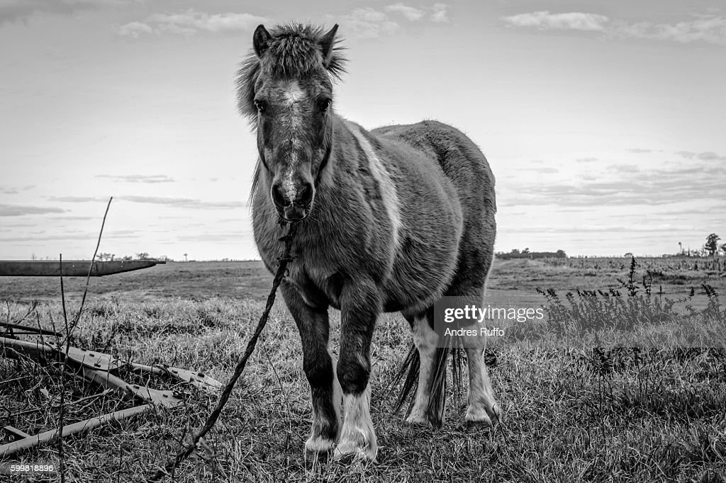 Close-up of a horse in the center of the scene isolated : Stock Photo