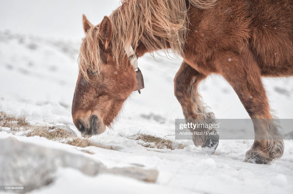Close-Up Of A Horse In Winter : Foto stock