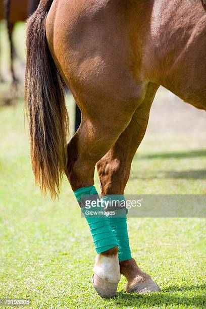 Close-up of a horse legs wrapped with bandages
